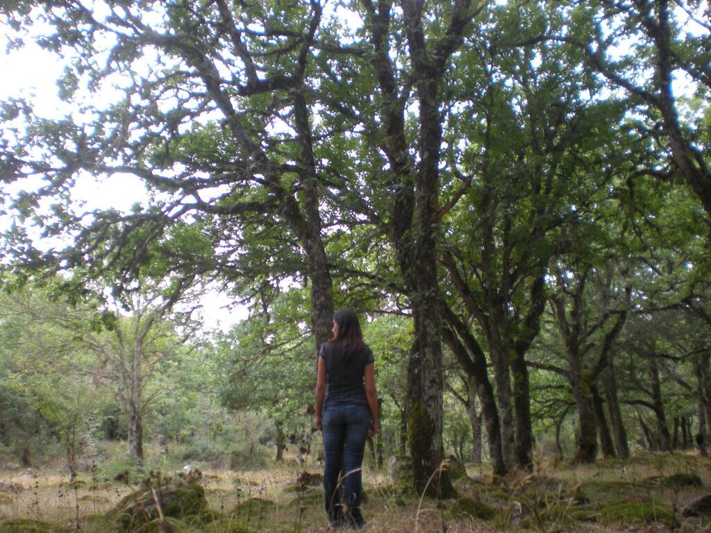 Ortachis