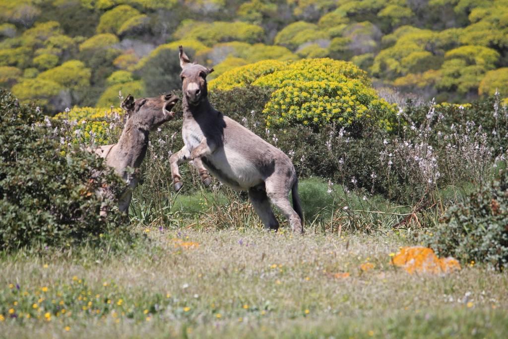 Fauna nell'isola dell'Asinara