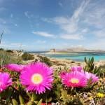 Sardegna On The Road in Primavera